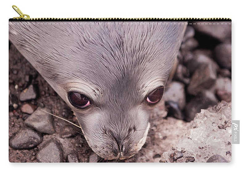 Animal Themes Carry-all Pouch featuring the photograph Weddell Seal Pup, Antarctica by Mint Images/ Art Wolfe
