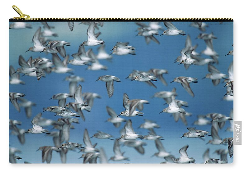 Animal Themes Carry-all Pouch featuring the photograph Western Sandpipers Calidris Mauri by Eastcott Momatiuk