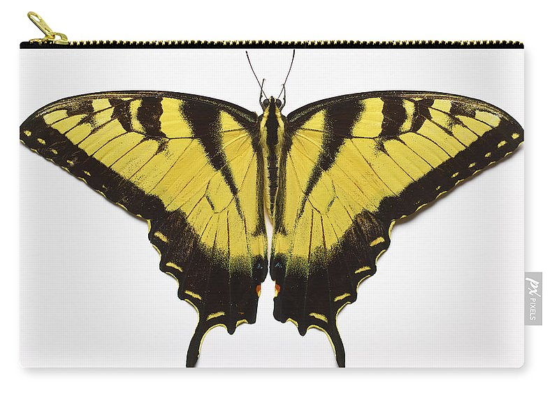 White Background Carry-all Pouch featuring the photograph Western Tiger Swallowtail Butterfly by Don Farrall