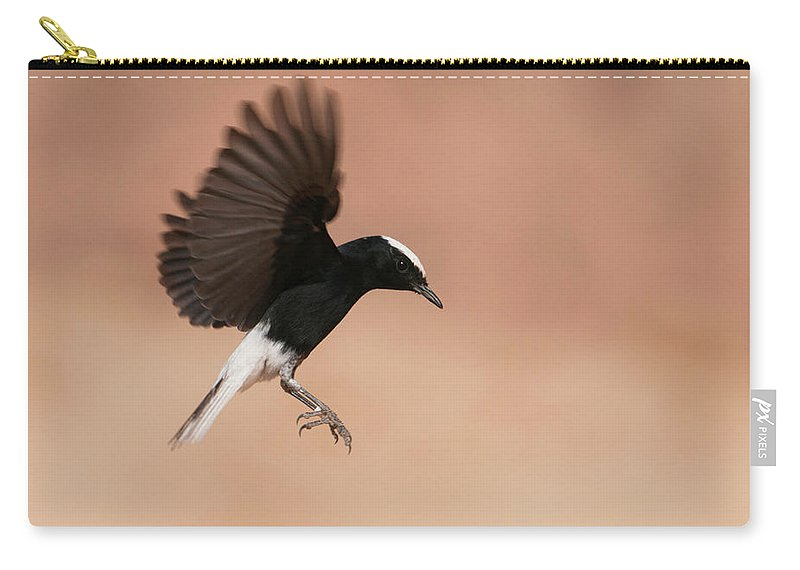 Eilat Carry-all Pouch featuring the photograph White Crowned Wheatear by Dorit Bar-zakay