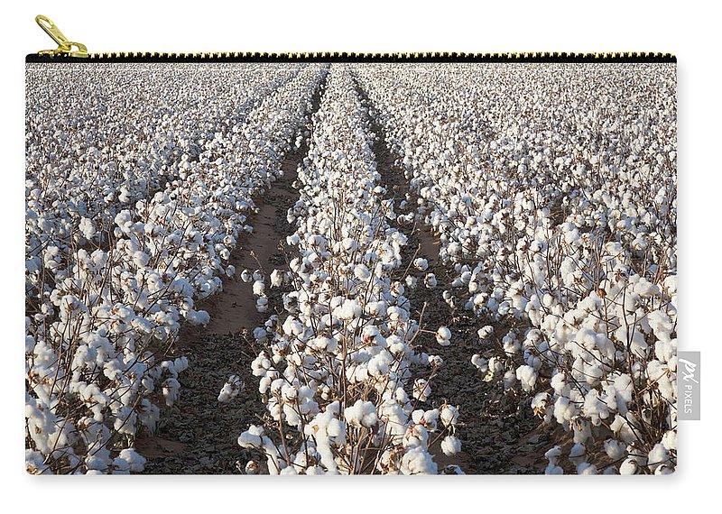 Scenics Carry-all Pouch featuring the photograph White Ripe Cotton Crop Plants Rows by Dszc