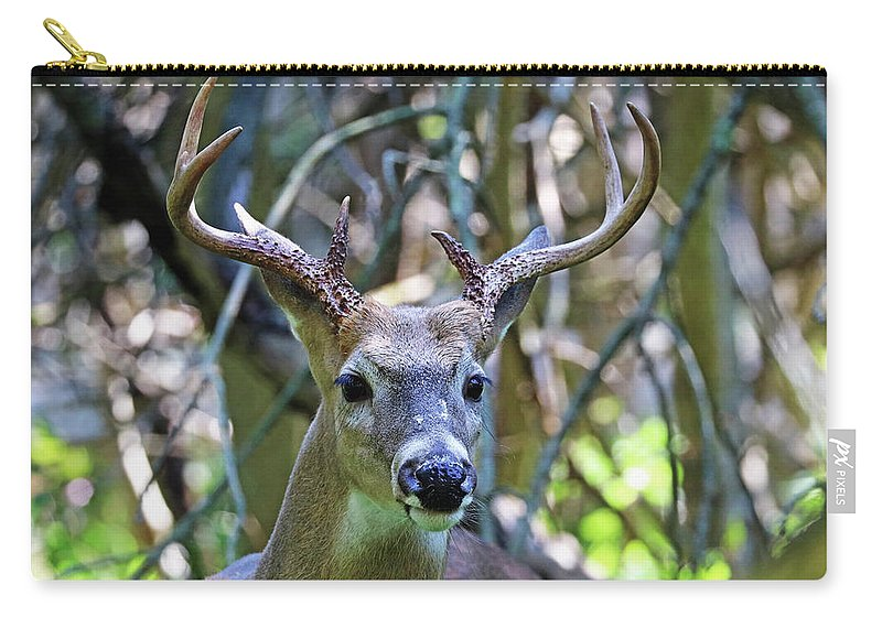 Deer Carry-all Pouch featuring the photograph White Tailed Buck Portrait by Debbie Oppermann