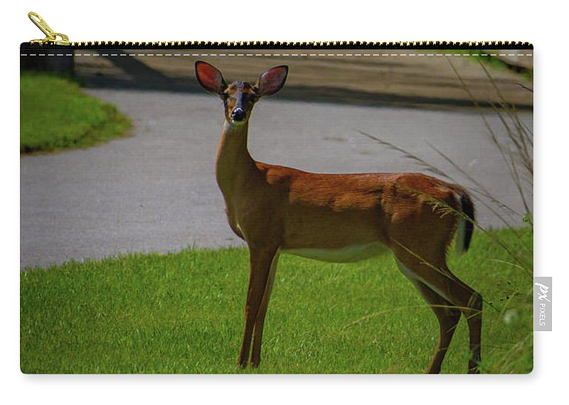Deer Carry-all Pouch featuring the photograph White Tailed Doe by Blair Howell