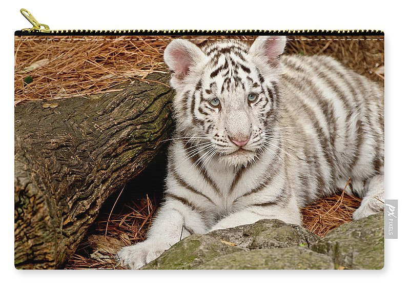 White Tiger Carry-all Pouch featuring the photograph White Tiger Cub by Empphotography