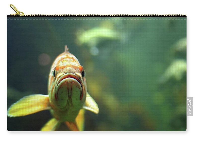 Underwater Carry-all Pouch featuring the photograph Why The Sad Face by By Jun Aviles