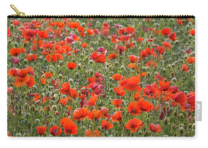 Panoramic Carry-all Pouch featuring the photograph Wild Poppies, Val Dorcia, Pienza by David C Tomlinson