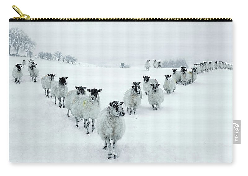 Cool Attitude Carry-all Pouch featuring the photograph Winter Sheep V Formation by Motorider