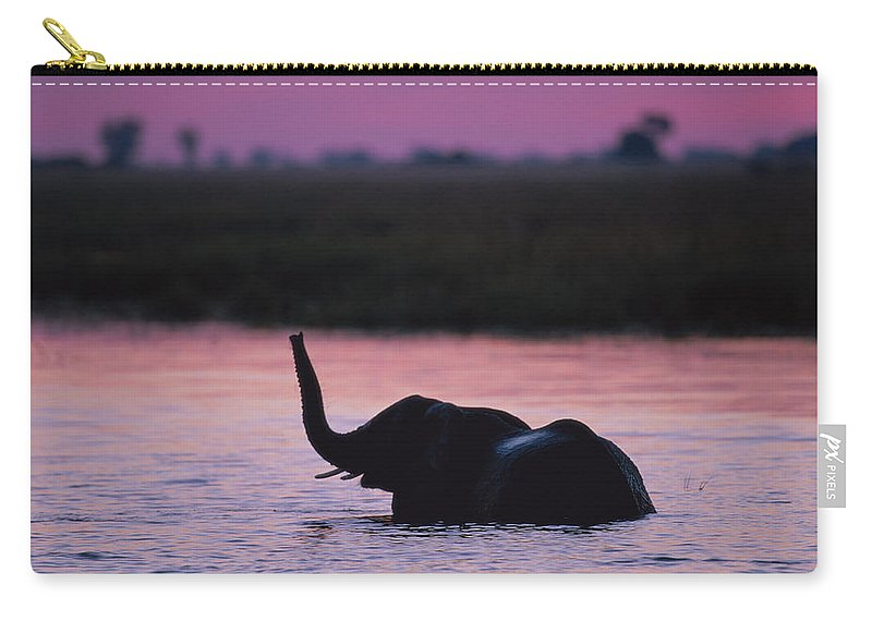 Botswana Carry-all Pouch featuring the photograph Young Elephant Loxodonta Africanan by Paul Souders