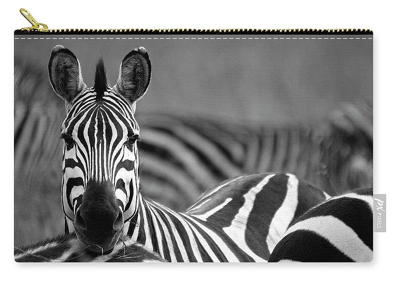 Plains Zebra Carry-all Pouch featuring the photograph Zebra by Wldavies