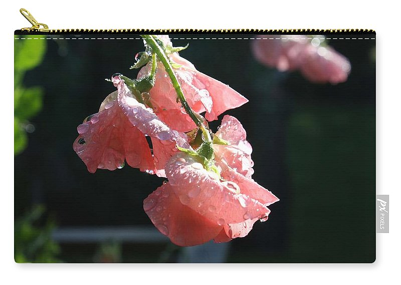 Sweet Pea Carry-all Pouch featuring the photograph Blush Sweet Pea by Vicki Cridland