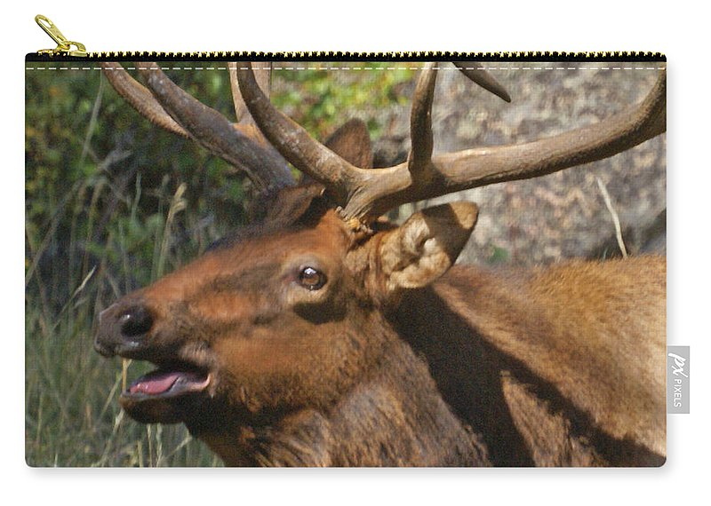 Elk Carry-all Pouch featuring the photograph Bull Elk 3 by Heather Coen