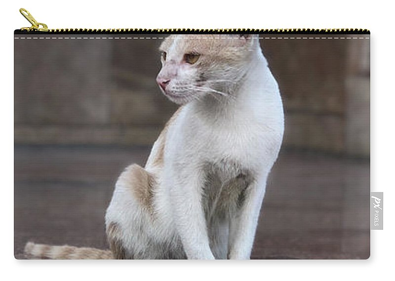 Wallpaper Carry-all Pouch featuring the photograph Cat Sitting On Marble Floor by Prashant Dalal