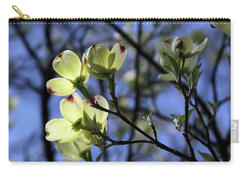 Dogwood Tree Carry-all Pouch featuring the photograph Dogwood in Sunlight by John Lautermilch