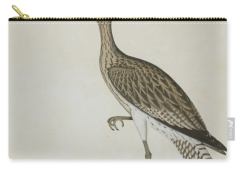 Eastern Curlew Carry-all Pouch featuring the painting Eastern Curlew Devouring A Mudskipper, 1778 by Shaikh Zain ud Din