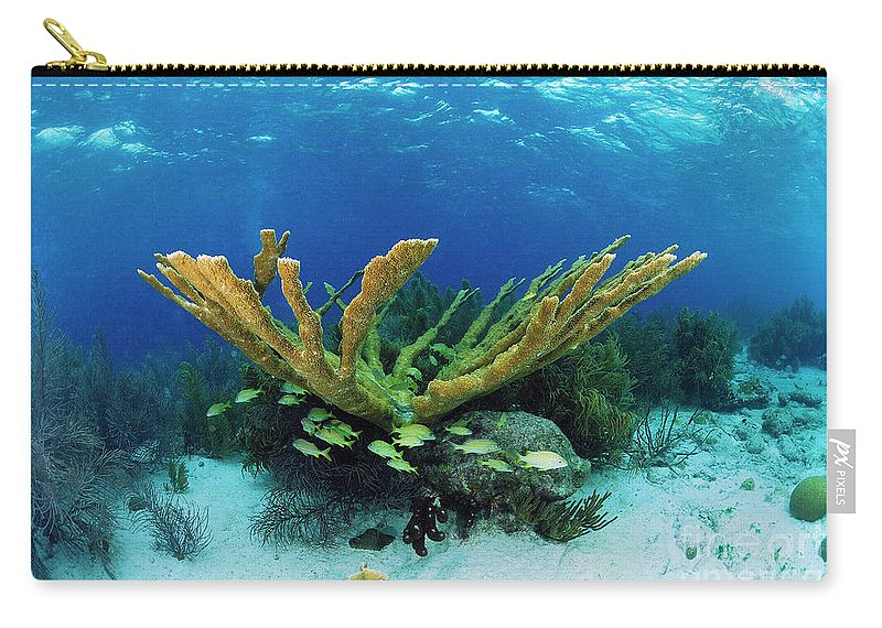 70007084 Carry-all Pouch featuring the photograph Elkhorn Coral by Hans Leijnse