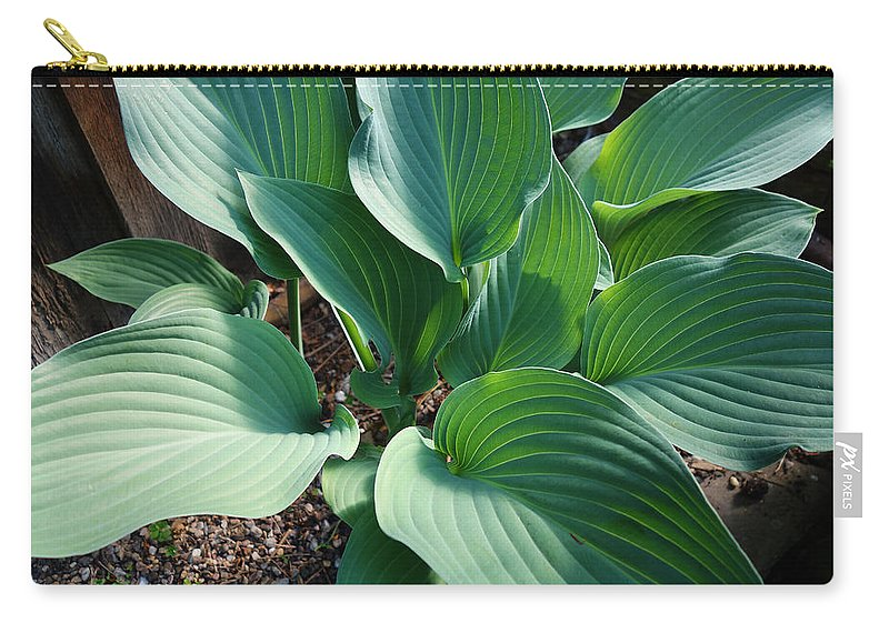 Hosters Carry-all Pouch featuring the painting Green leaves by Charles Stuart