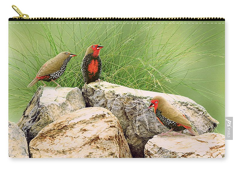 Bird Carry-all Pouch featuring the painting Rock Stars - Painted Finches by Frances McMahon