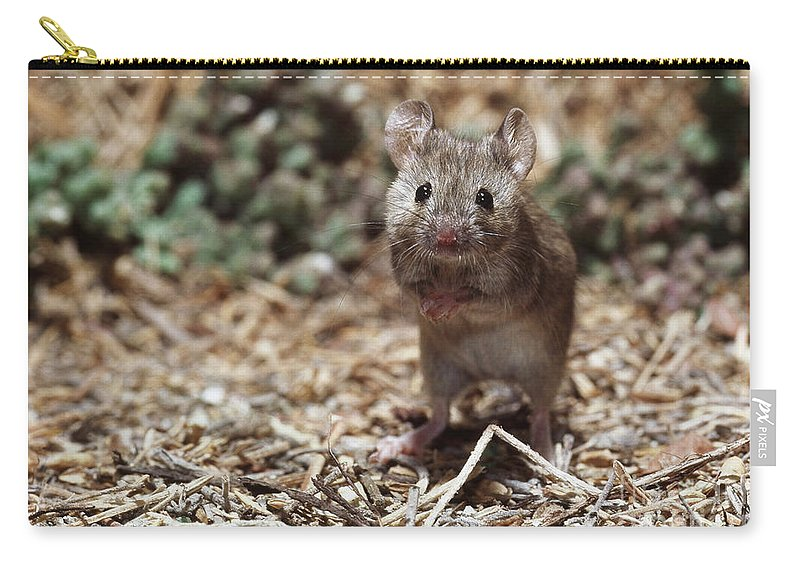 Animal Carry-all Pouch featuring the photograph Salt Marsh Harvest Mouse by Tom McHugh