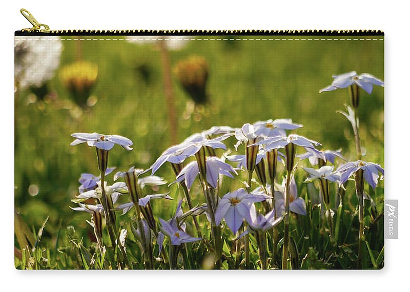 Star Flower Carry-all Pouch featuring the photograph Stars And Dandelions by Rachel Morrison