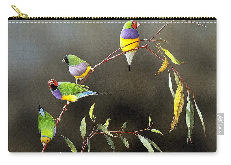 Bird Carry-all Pouch featuring the painting Three Guys for Every Girl - Gouldian Finches by Frances McMahon