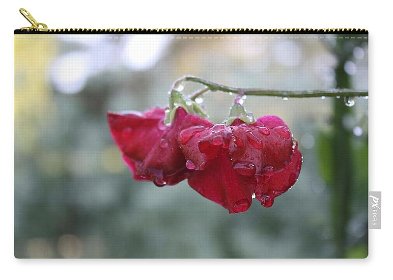 Wine Red Carry-all Pouch featuring the photograph Wine Red Sweet Pea by Vicki Cridland