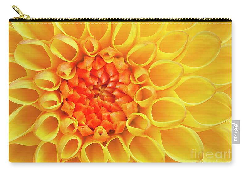 Yellow Flower Carry-all Pouch featuring the photograph Yellow Dahlia Flower Head by Neale And Judith Clark