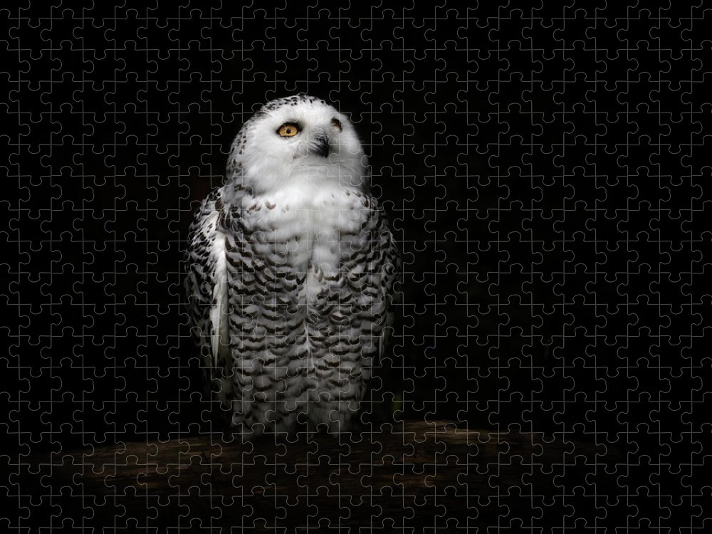 Animal Themes Puzzle featuring the photograph An Owl by Kaneko Ryo