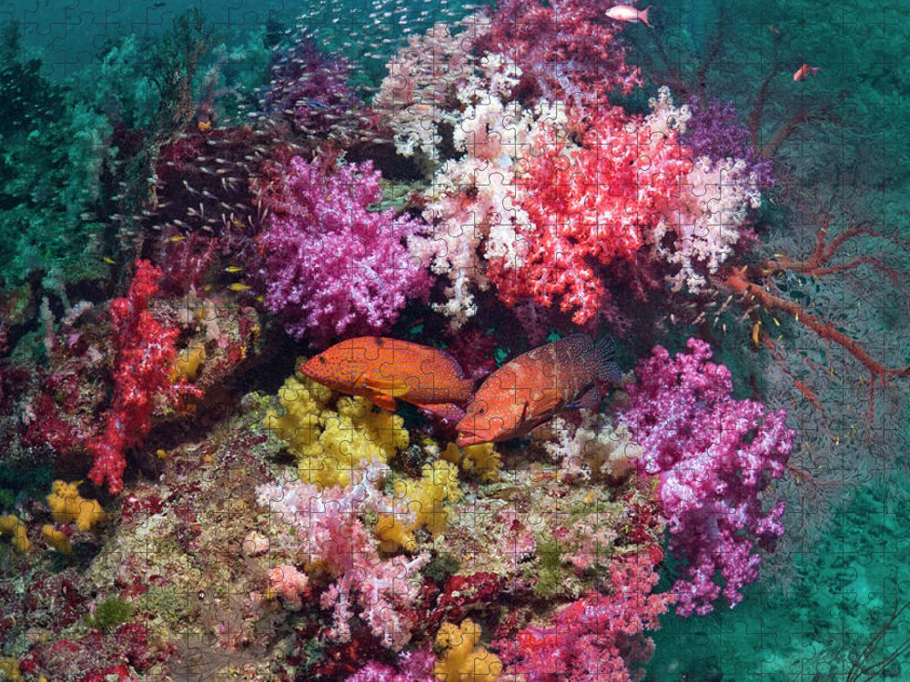Tranquility Puzzle featuring the photograph Coral Reef Scenery by Georgette Douwma