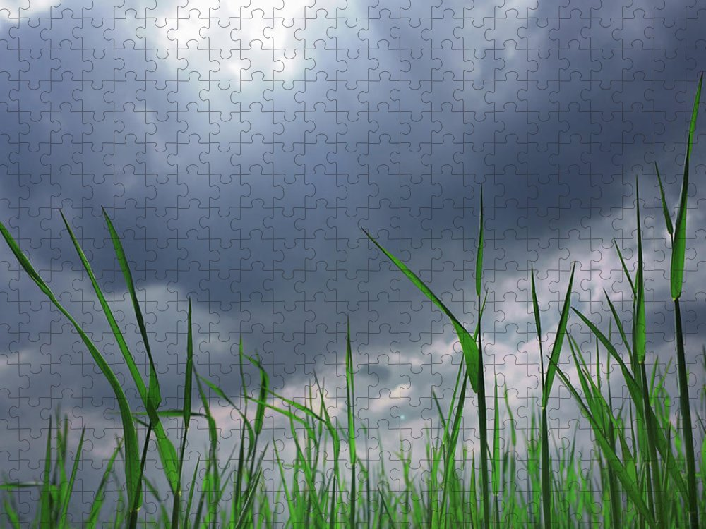 Thunderstorm Puzzle featuring the photograph Corn Plant With Thunderstorm Clouds by Silvia Otte
