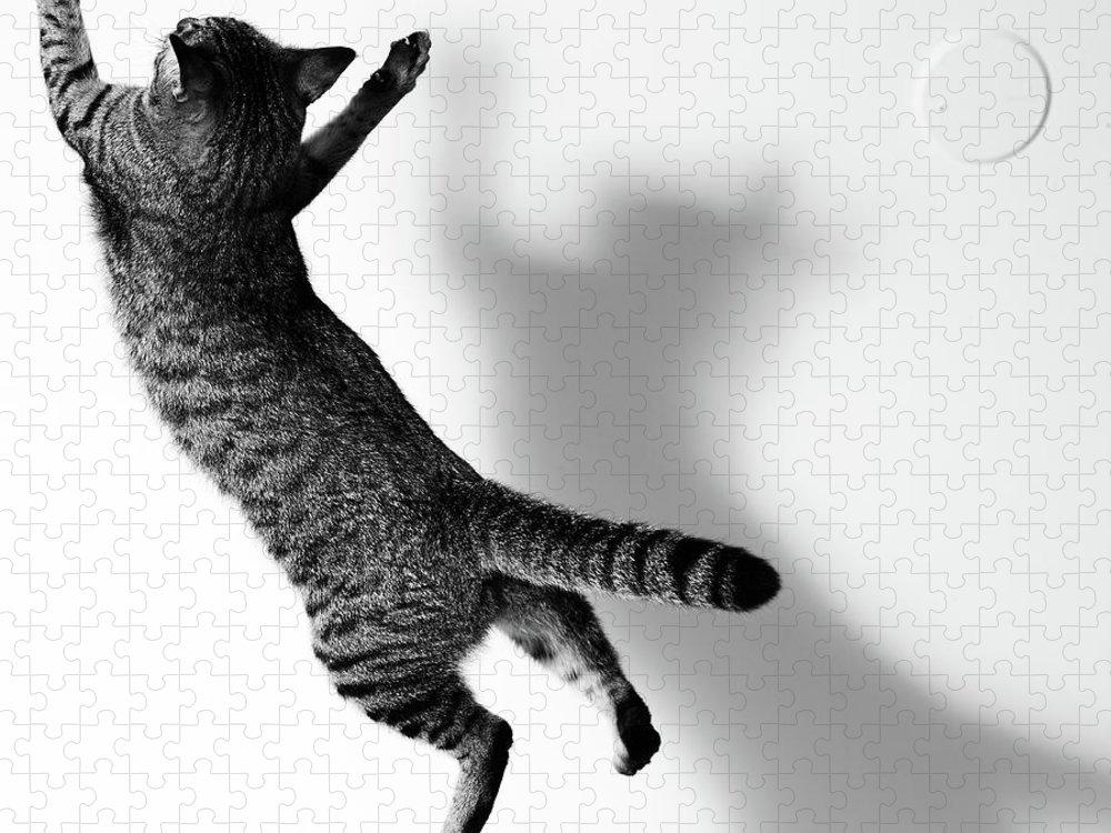 Pets Puzzle featuring the photograph Jumping Cat by Akimasa Harada
