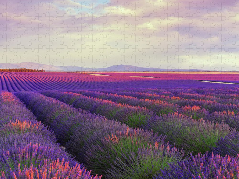 Dawn Puzzle featuring the photograph Lavender Field At Dusk by Mammuth