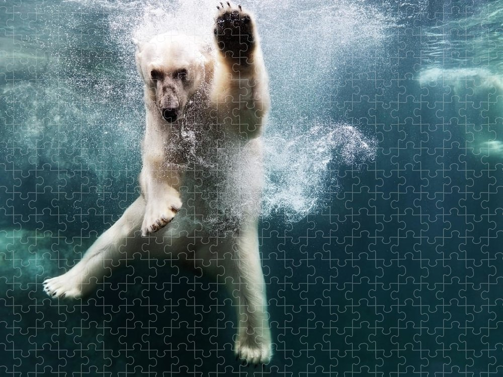 Diving Into Water Puzzle featuring the photograph Polarbear In Water by Henrik Sorensen