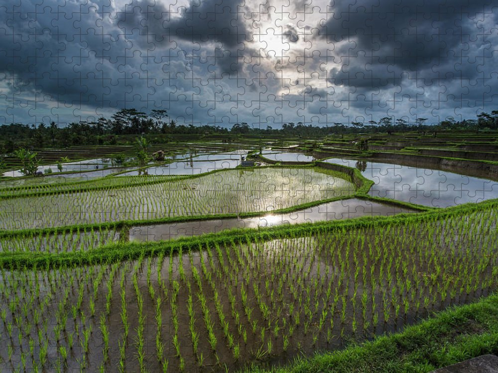 Tranquility Puzzle featuring the photograph Rice Terraces In Central Bali Indonesia by Gavriel Jecan