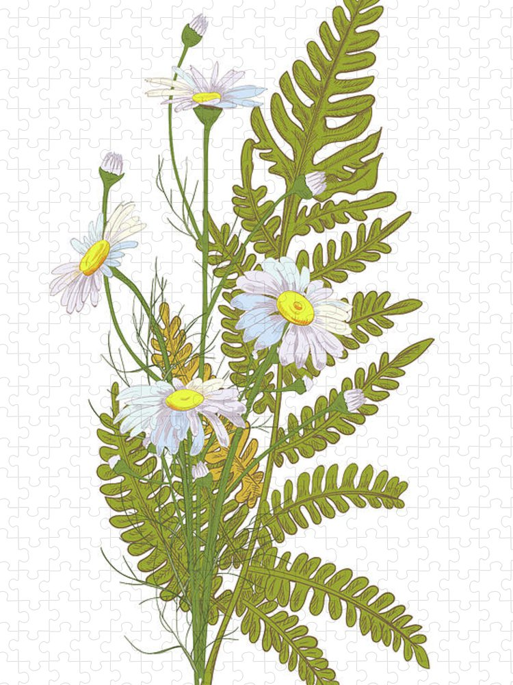 Flowerbed Puzzle featuring the digital art Set Of Chamomile Daisy Bouquets White by Olga Ivanova