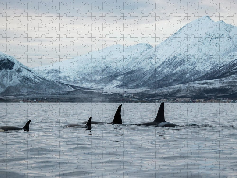 Snow Puzzle featuring the photograph 2 Big 2 Small by By Wildestanimal