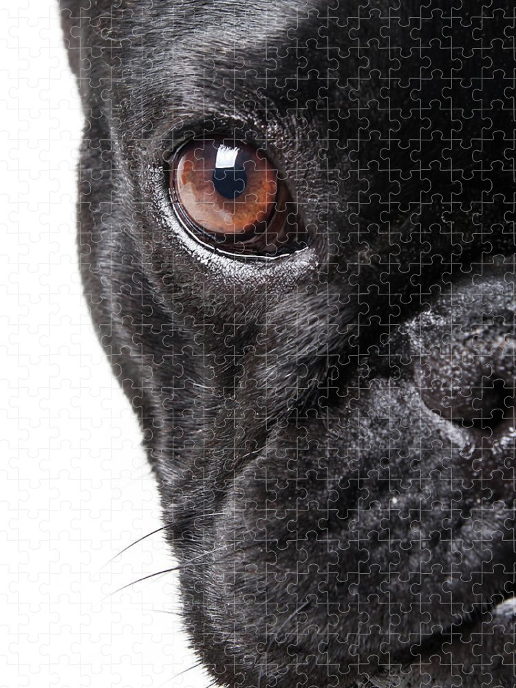 Pets Puzzle featuring the photograph French Bulldog by Retales Botijero