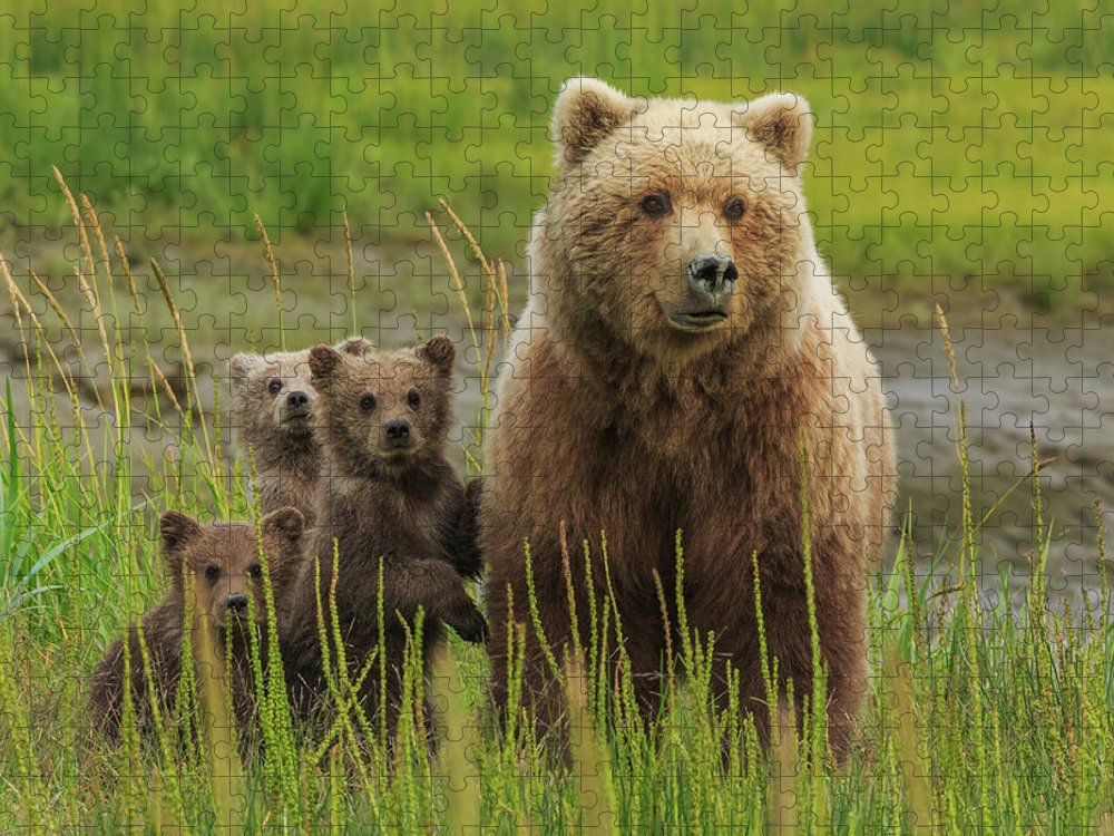 Brown Bear Puzzle featuring the photograph Brown Bear Sow And Cubs, Lake Clark by Mint Images/ Art Wolfe