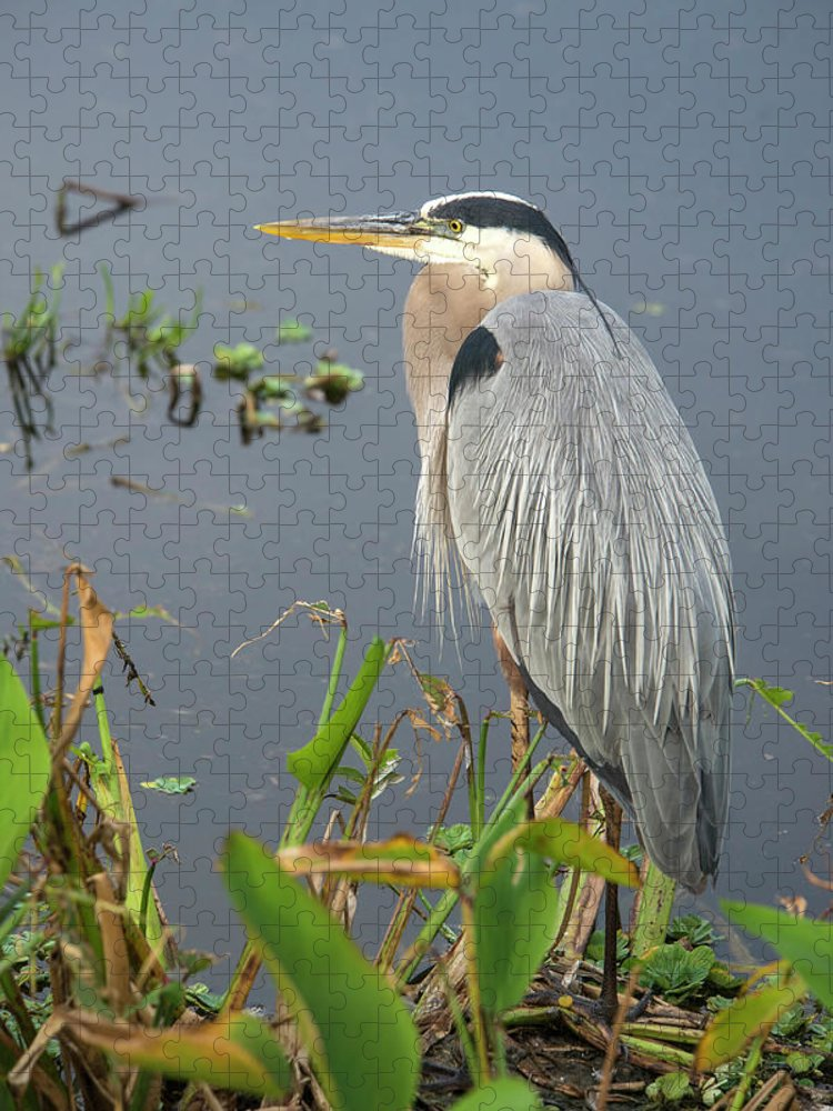 Standing Water Puzzle featuring the photograph Great Blue Heron by Mark Newman
