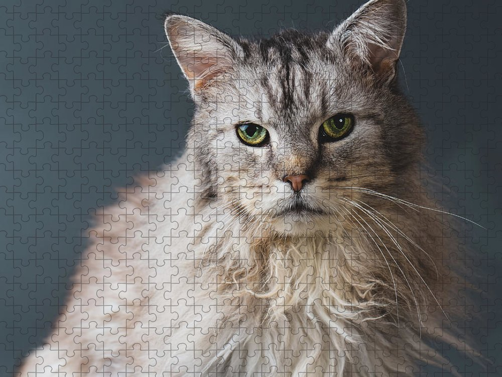 Pets Puzzle featuring the photograph Fortunate Tails by Matt Porteous