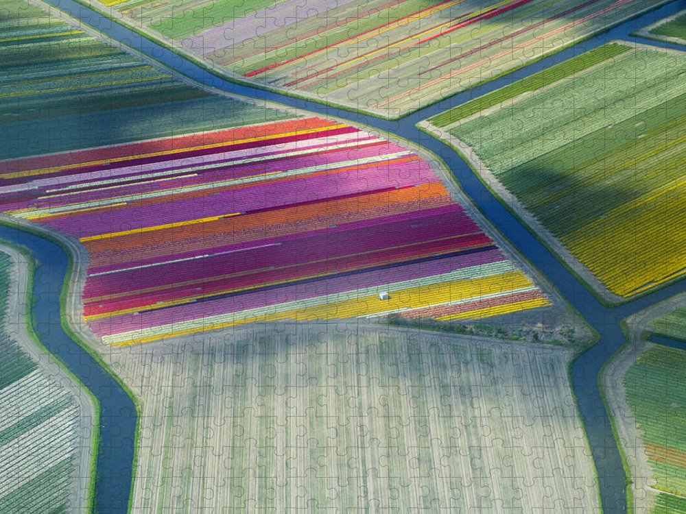 Curve Puzzle featuring the photograph Aerial View Of Flower Fields In Spring by Frans Sellies