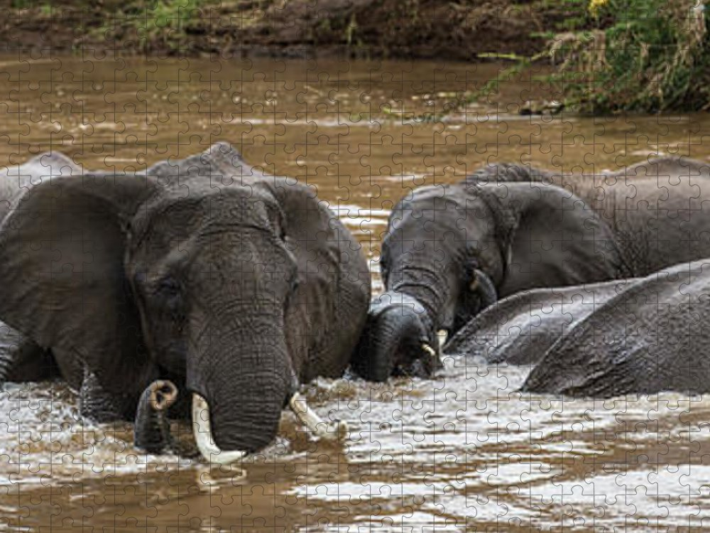 Kenya Puzzle featuring the photograph African Elephants Having A Bath In Mara by Manoj Shah