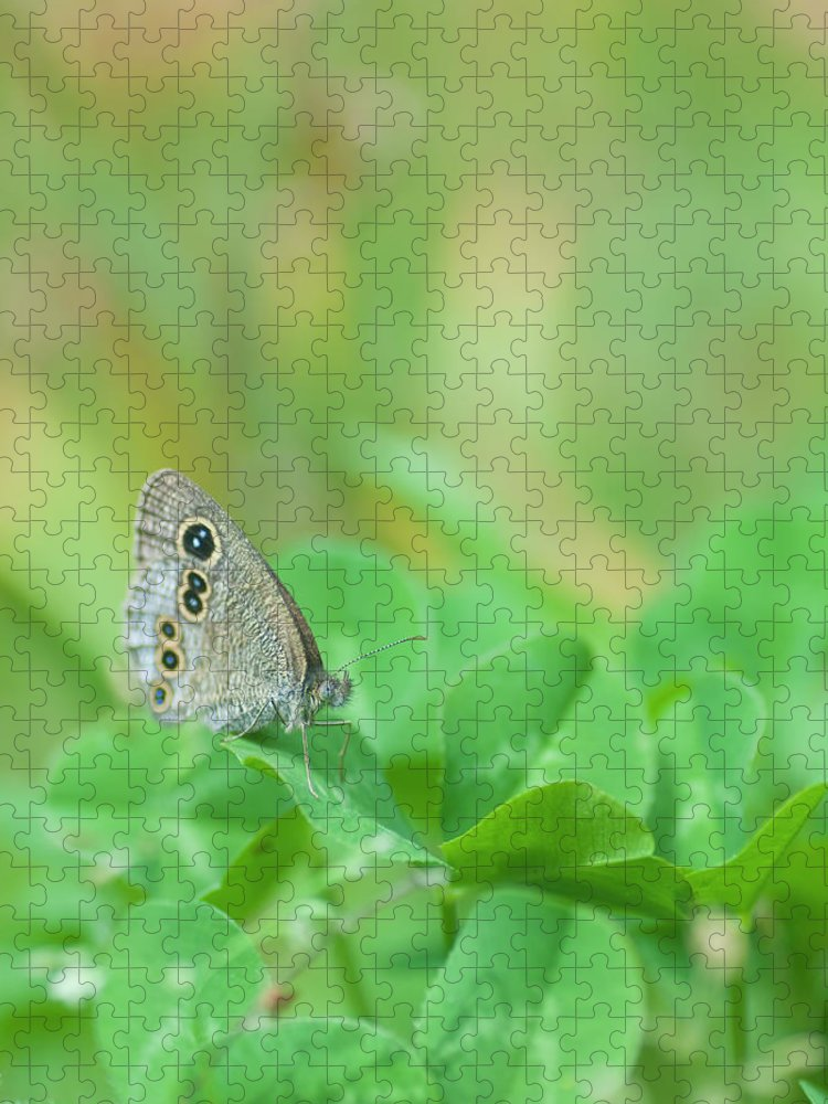 Insect Puzzle featuring the photograph Argus Rings Butterfly by Polotan