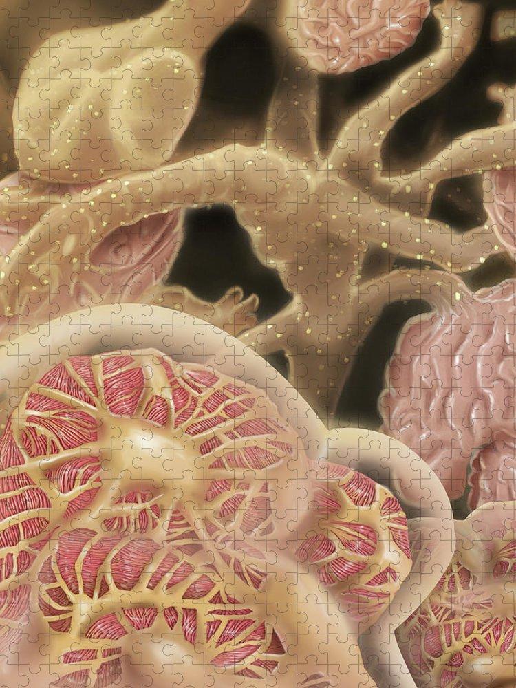 Nephron Puzzle featuring the digital art Artist Depcition Of Glomerulus by Alan Gesek/stocktrek Images
