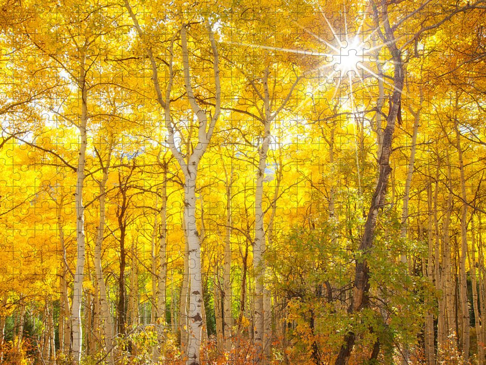 Aspens Puzzle featuring the photograph Aspen Morning by Darren White