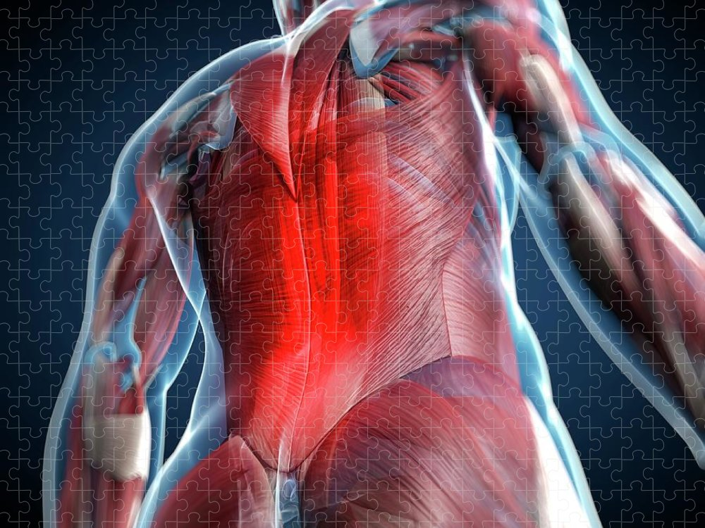 Physiology Puzzle featuring the digital art Back Pain, Conceptual Artwork by Science Photo Library - Sciepro