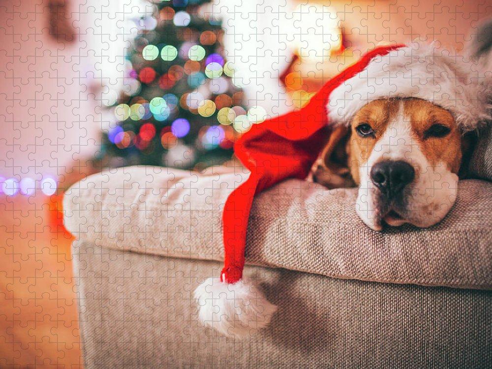 Pets Puzzle featuring the photograph Beagle Santa by Aleksandarnakic