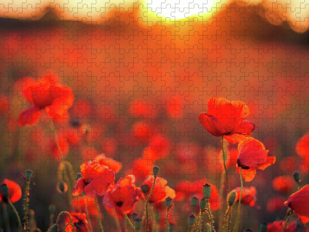 Tranquility Puzzle featuring the photograph Beautiful Sunset Over Poppy Field by Levente Bodo