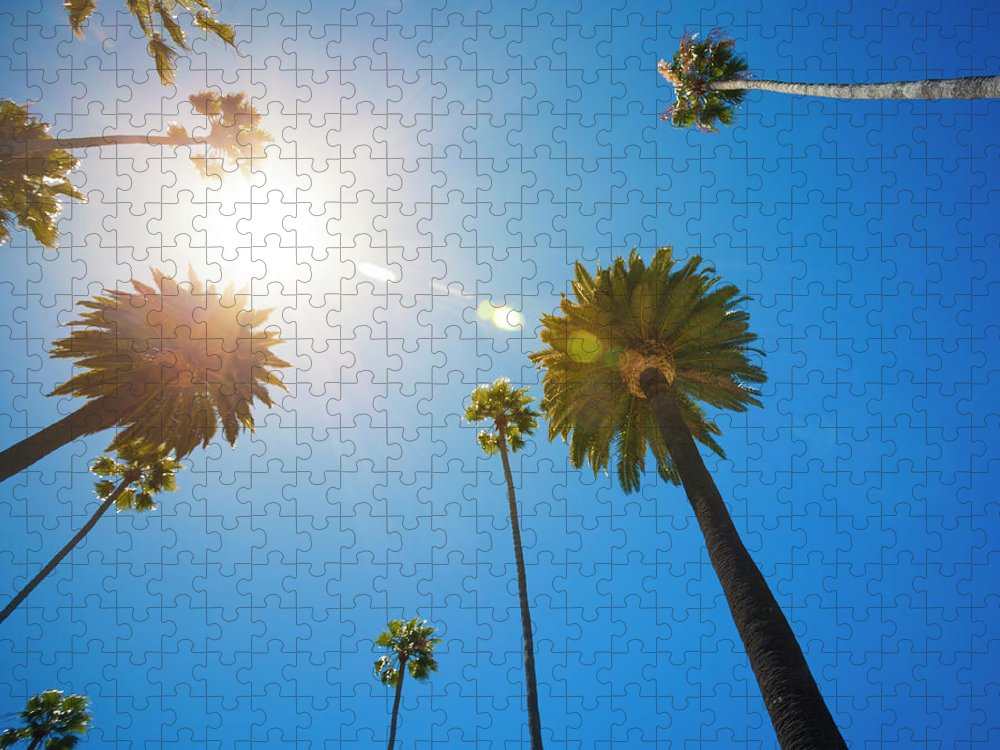 Beverly Hills Puzzle featuring the photograph Beverly Hills Palm Trees by Lpettet