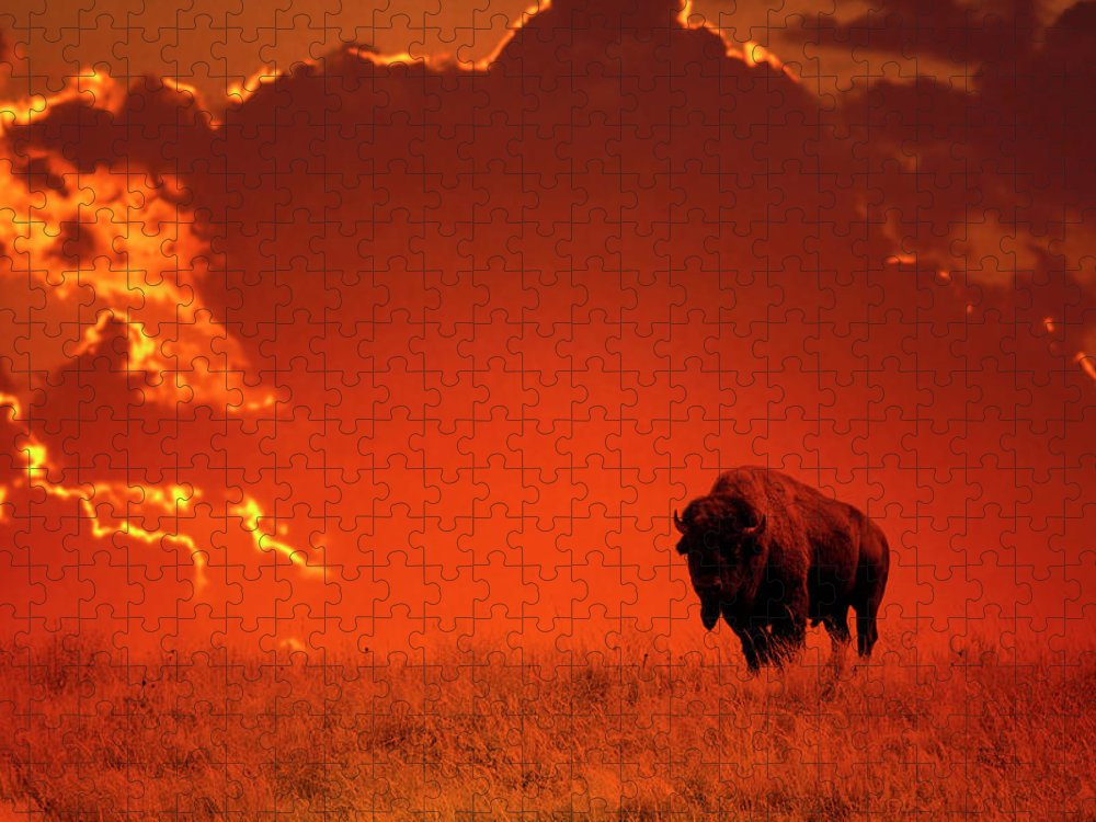 Scenics Puzzle featuring the photograph Bison At Sunset by Mark Newman