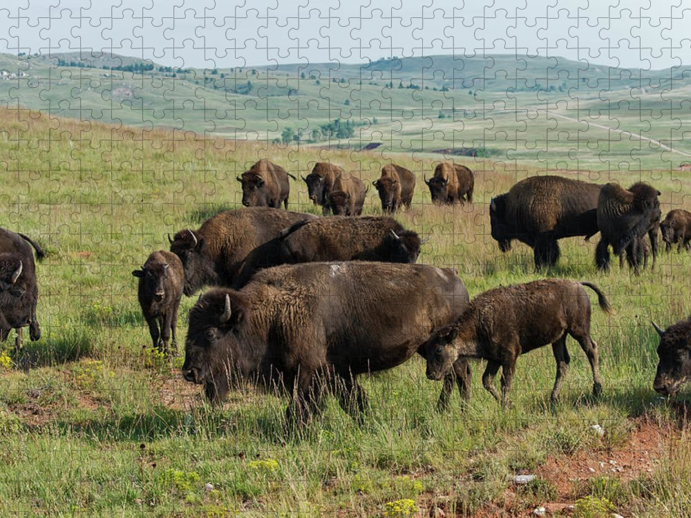 Grass Puzzle featuring the photograph Bison Buffalo In Wind Cave National Park by Mark Newman